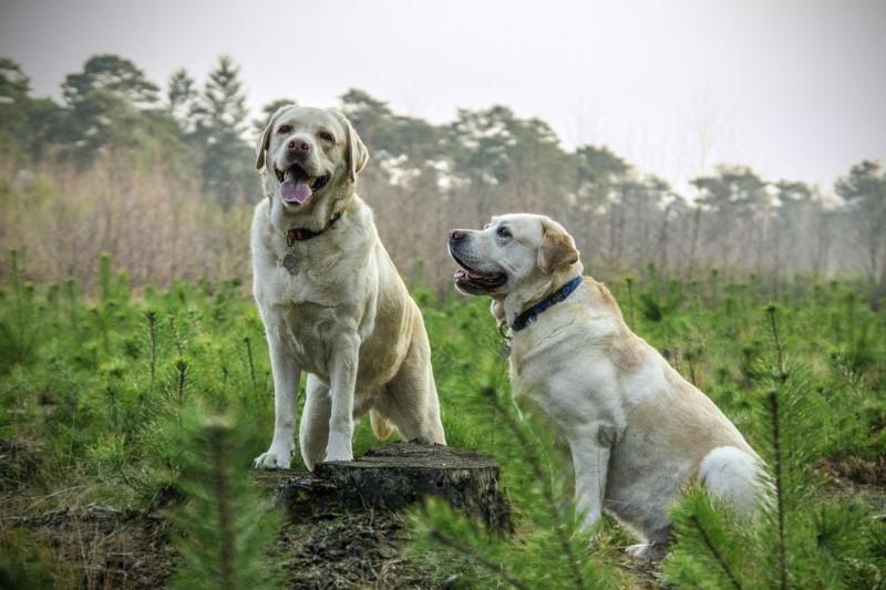 Arion hundefoder - det bedste til din hund