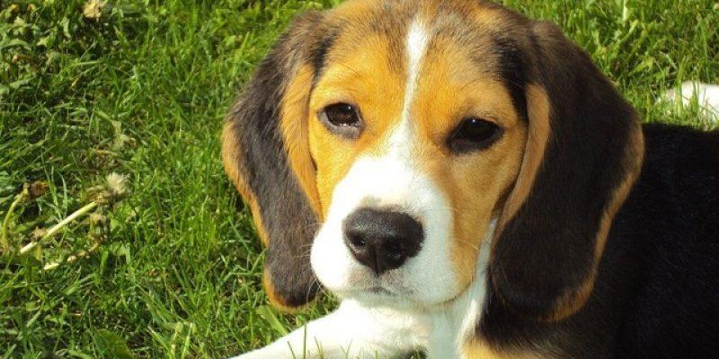 Sådan finder du det rigtige halsbånd til din hund