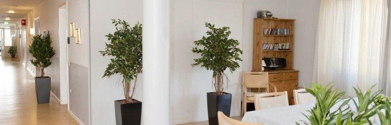 Kunstige planter - når din allergi siger nej til den ægte vare